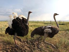 http://prirodastepi.ru/view/images/animals/1.jpg