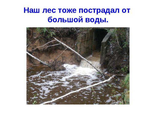 Наш лес тоже пострадал от большой воды.