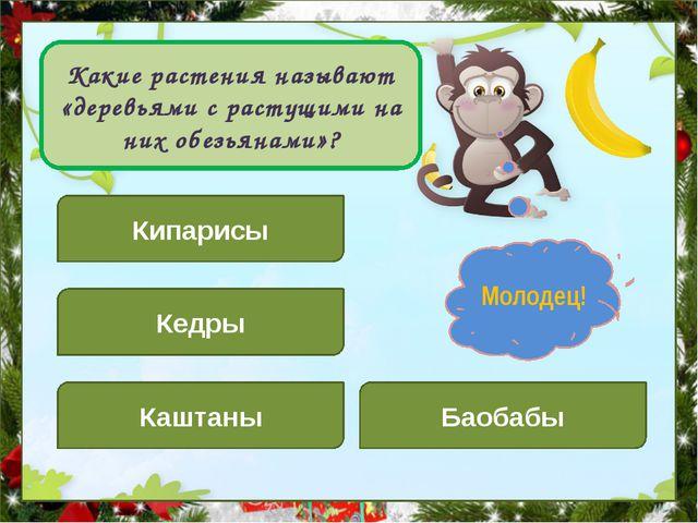 Какие растения называют «деревьями с растущими на них обезьянами»? Кипарисы...