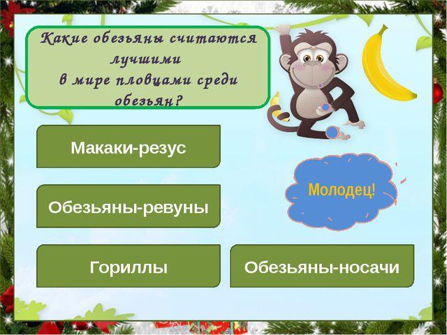 Какие обезьяны считаются лучшими в мире пловцами среди обезьян? Макаки-резус...