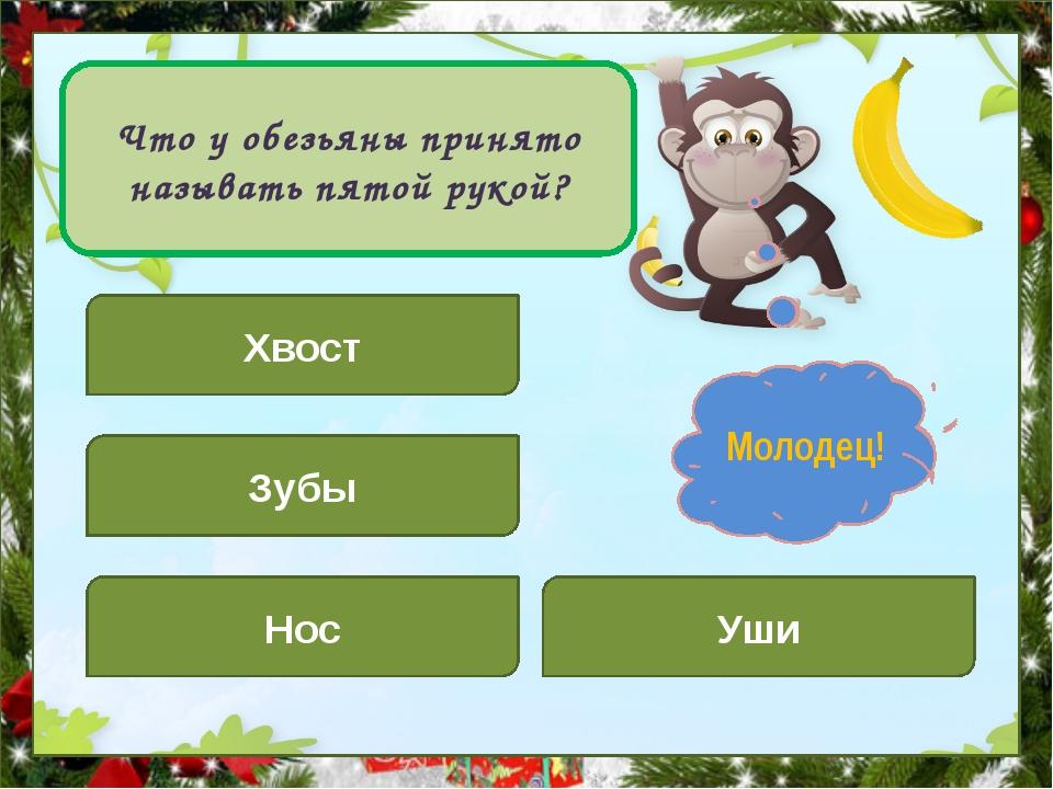 Что у обезьяны принято называть пятой рукой? Хвост Уши Зубы Нос Подумай! Мол...