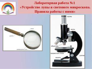Лабораторная работа №1 «Устройство лупы и светового микроскопа. Правила работ
