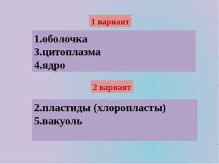 1 вариант 1.оболочка 3.цитоплазма 4.ядро 2 вариант 2.пластиды (хлоропласты) 5