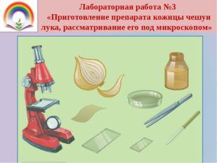 Лабораторная работа №3 «Приготовление препарата кожицы чешуи лука, рассматрив