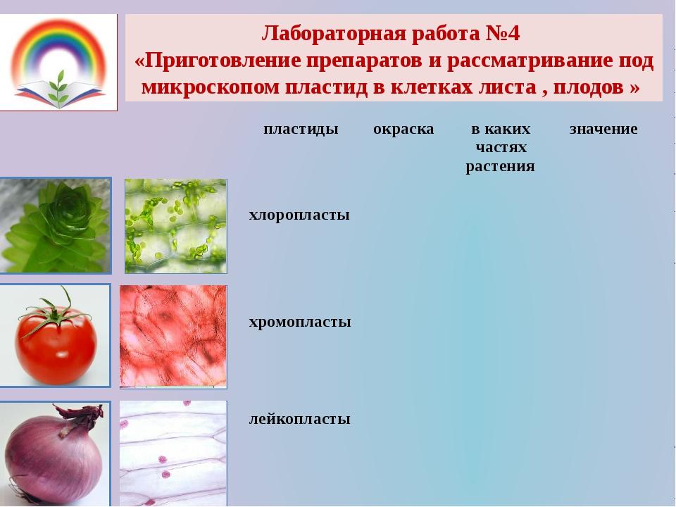 Лабораторная работа №4 «Приготовление препаратов и рассматривание под микроск...