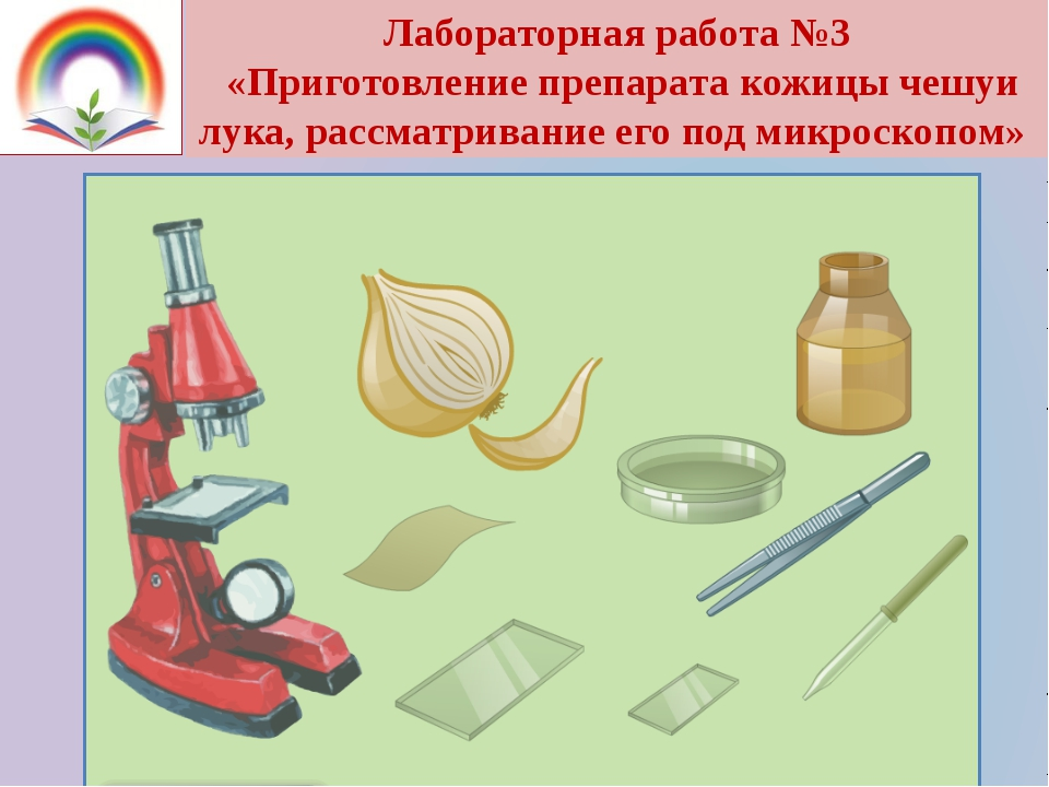 Лабораторная работа №3 «Приготовление препарата кожицы чешуи лука, рассматрив...
