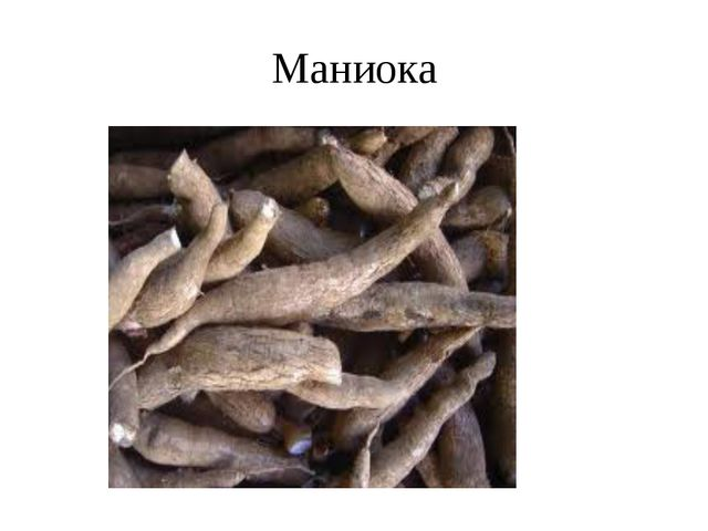 Маниока