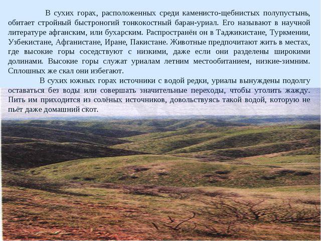 В сухих горах, расположенных среди каменисто-щебнистых полупустынь, обитает...