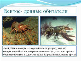 Бентос- донные обитатели Лангусты и омары — вкуснейшие морепродукты, по содер