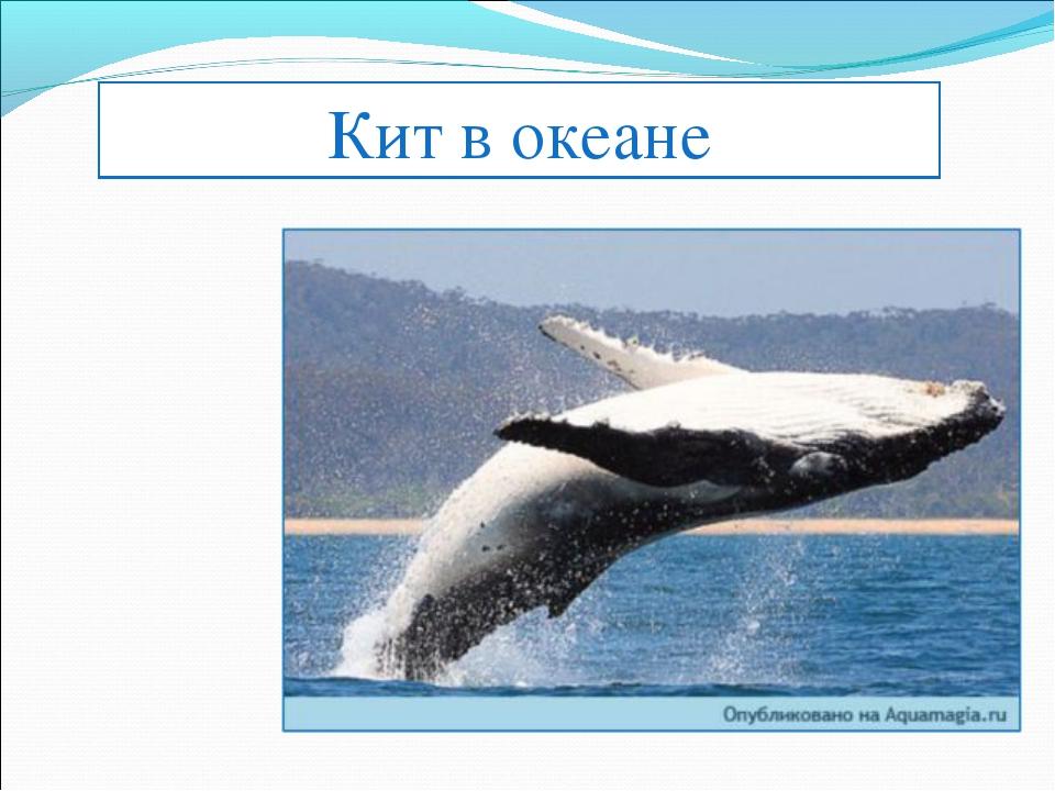 Кит в океане