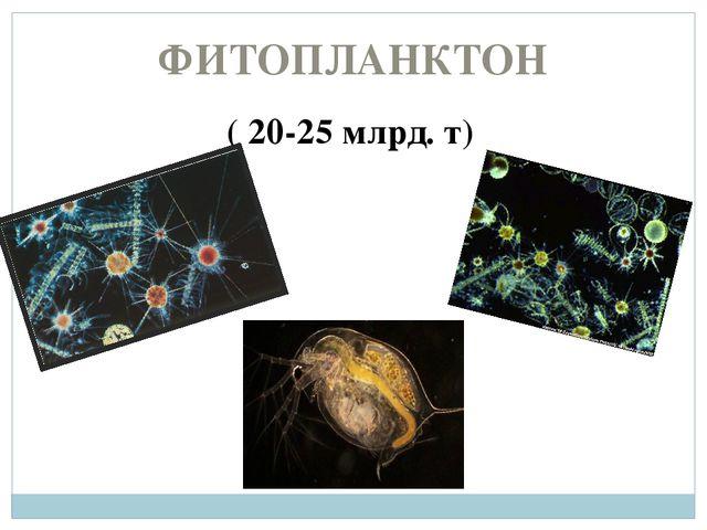 ФИТОПЛАНКТОН ( 20-25 млрд. т)