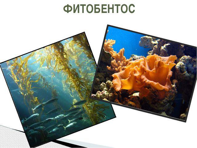 ФИТОБЕНТОС