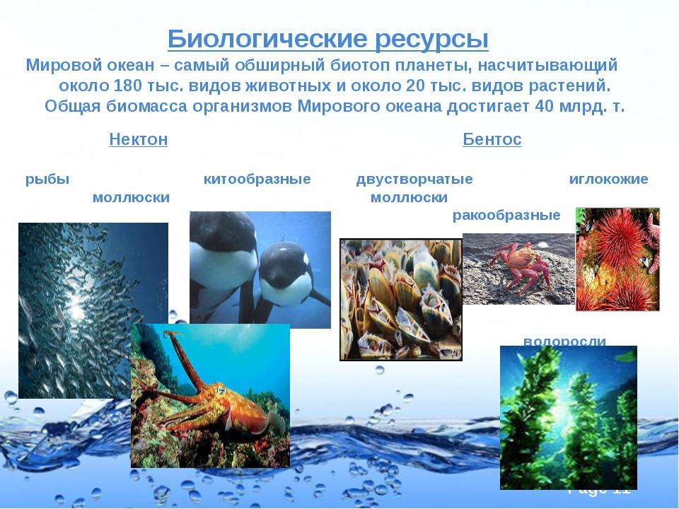 Биологические ресурсы Мировой океан – самый обширный биотоп планеты, насчиты...