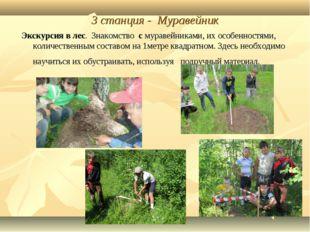 3 станция - Муравейник Экскурсия в лес. Знакомство с муравейниками, их особен