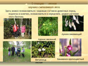 5 станция - лесная опушка смешанного леса. Здесь можно познакомиться с видовы