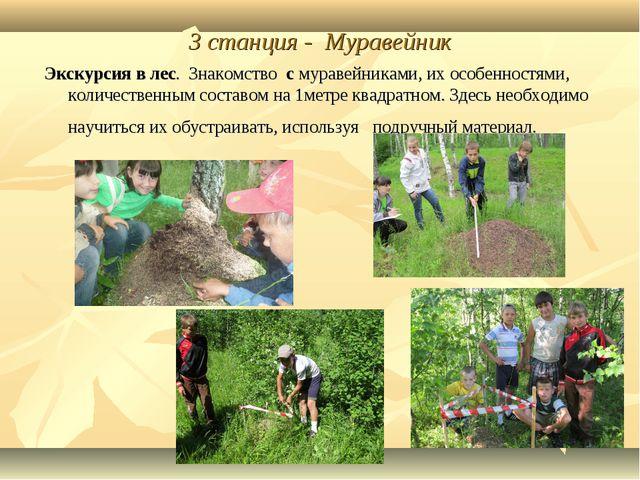 3 станция - Муравейник Экскурсия в лес. Знакомство с муравейниками, их особен...