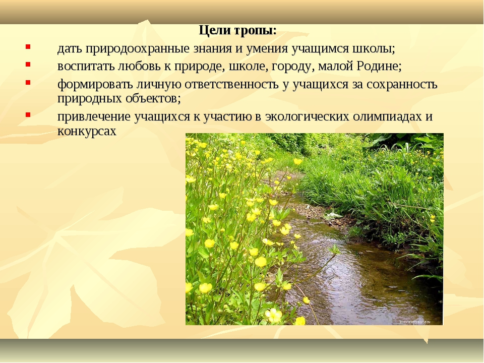 Цели тропы: дать природоохранные знания и умения учащимся школы; воспитать лю...