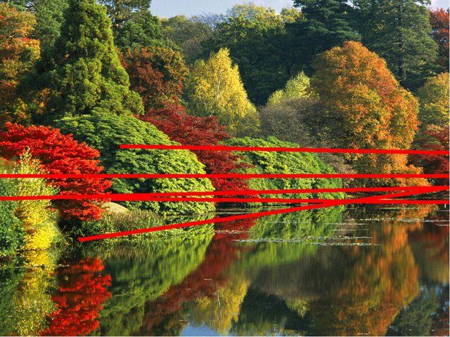Также существует зеркальная симметрия. Она преобладает в животном и раститель...
