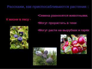 Расскажи, как приспосабливаются растения : К жизни в лесу - Семена разносятся