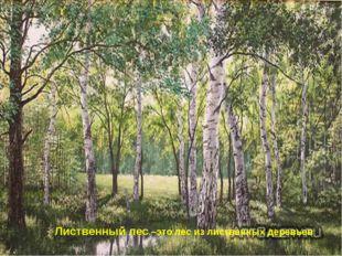 Лиственный лес –это лес из лиственных деревьев