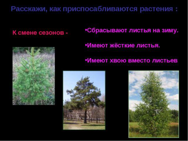 Расскажи, как приспосабливаются растения : К смене сезонов - Сбрасывают листь...