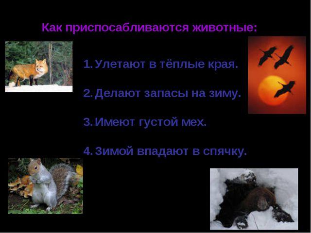 Как приспосабливаются животные: Улетают в тёплые края. Делают запасы на зиму....