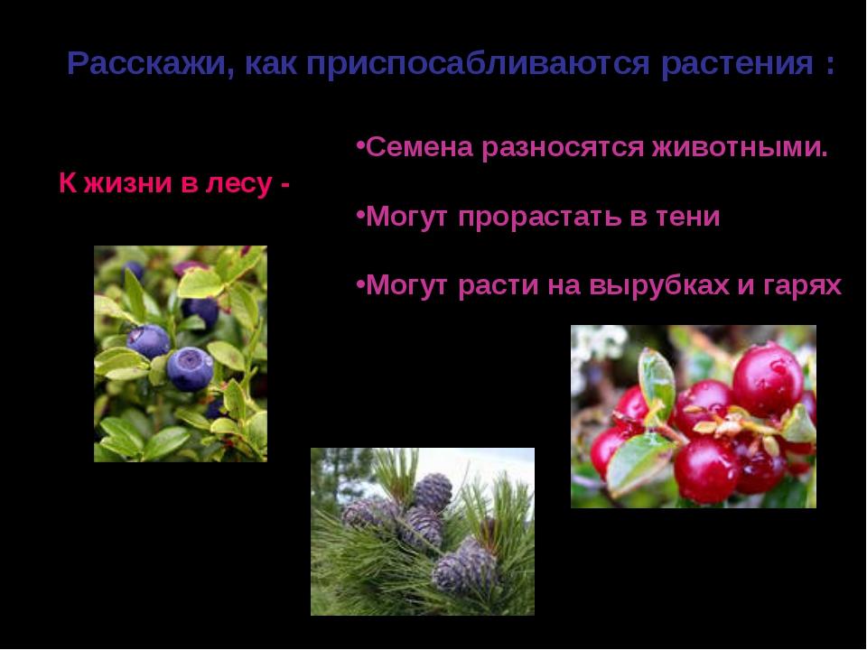 Расскажи, как приспосабливаются растения : К жизни в лесу - Семена разносятся...
