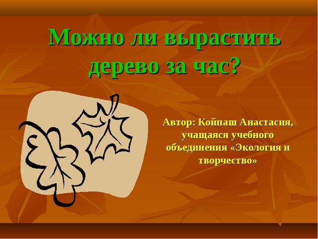 Можно ли вырастить дерево за час? Автор: Койпаш Анастасия, учащаяся учебного...