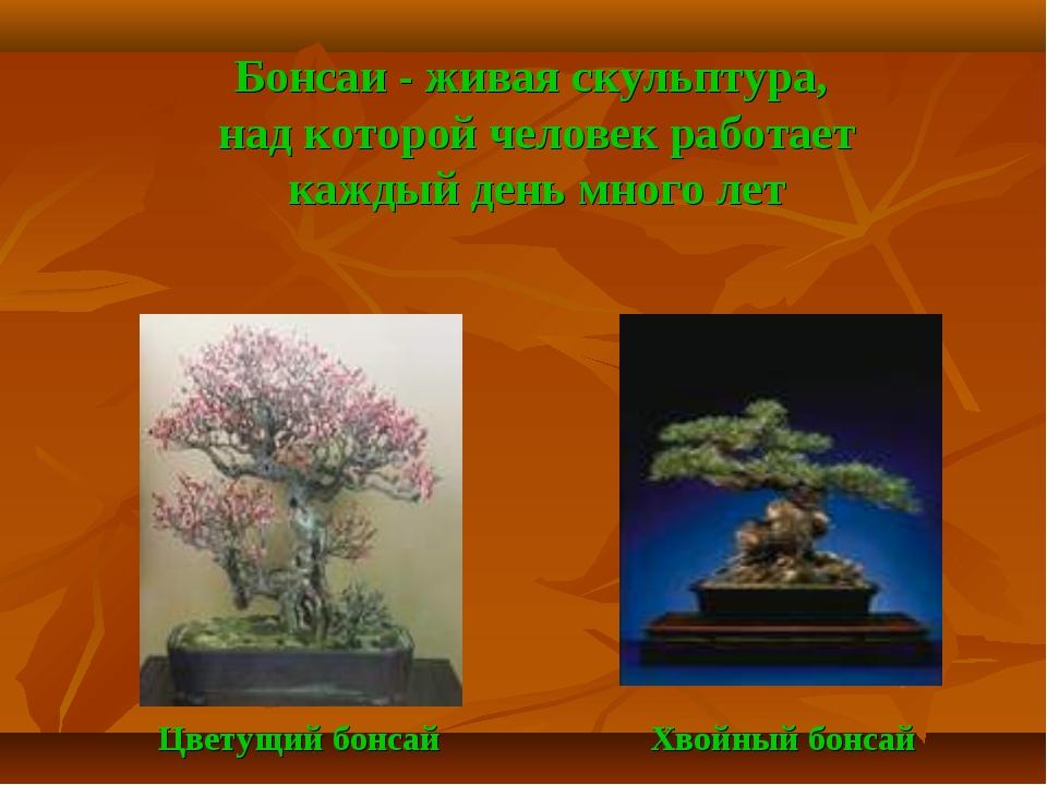 Бонсаи - живая скульптура, над которой человек работает каждый день много ле...