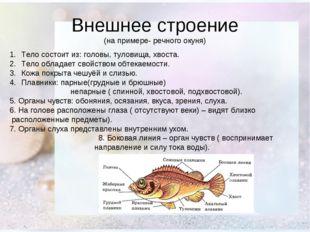 Внешнее строение (на примере- речного окуня) Тело состоит из: головы, туловищ
