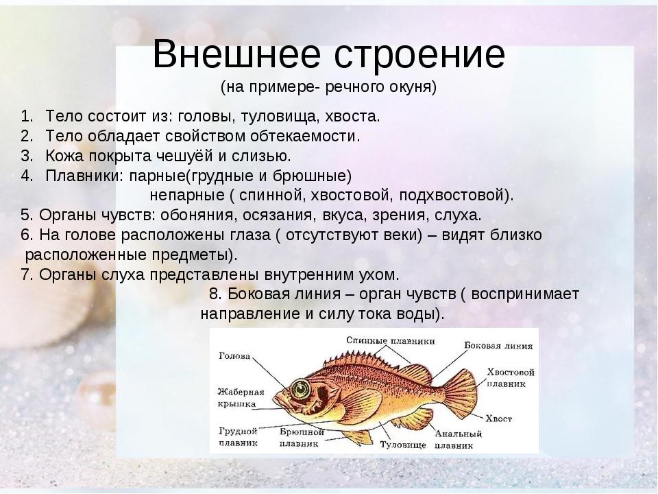 Внешнее строение (на примере- речного окуня) Тело состоит из: головы, туловищ...
