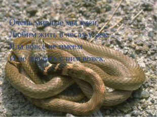 Очень мирные мы змеи, Любим жить в лесах у рек. Яда вовсе не имеем И не знали