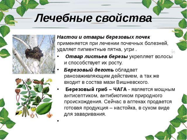 Лечебные свойства Настои и отвары березовых почек применяется при лечении поч...
