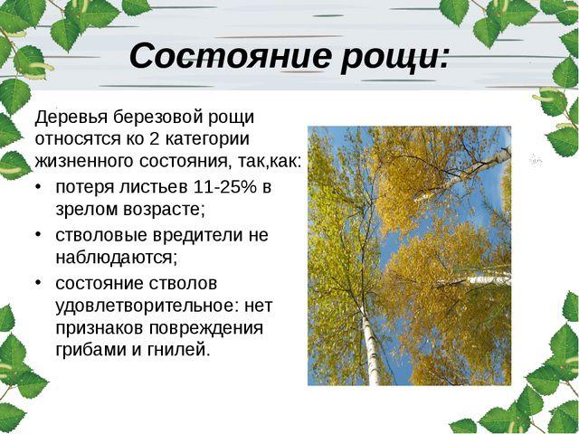 Состояние рощи: Деревья березовой рощи относятся ко 2 категории жизненного со...