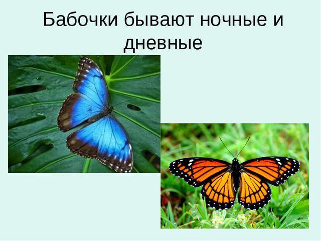 Бабочки бывают ночные и дневные