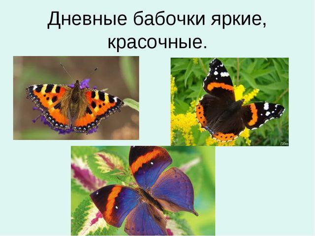 Дневные бабочки яркие, красочные.