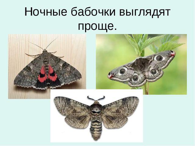 Ночные бабочки выглядят проще.