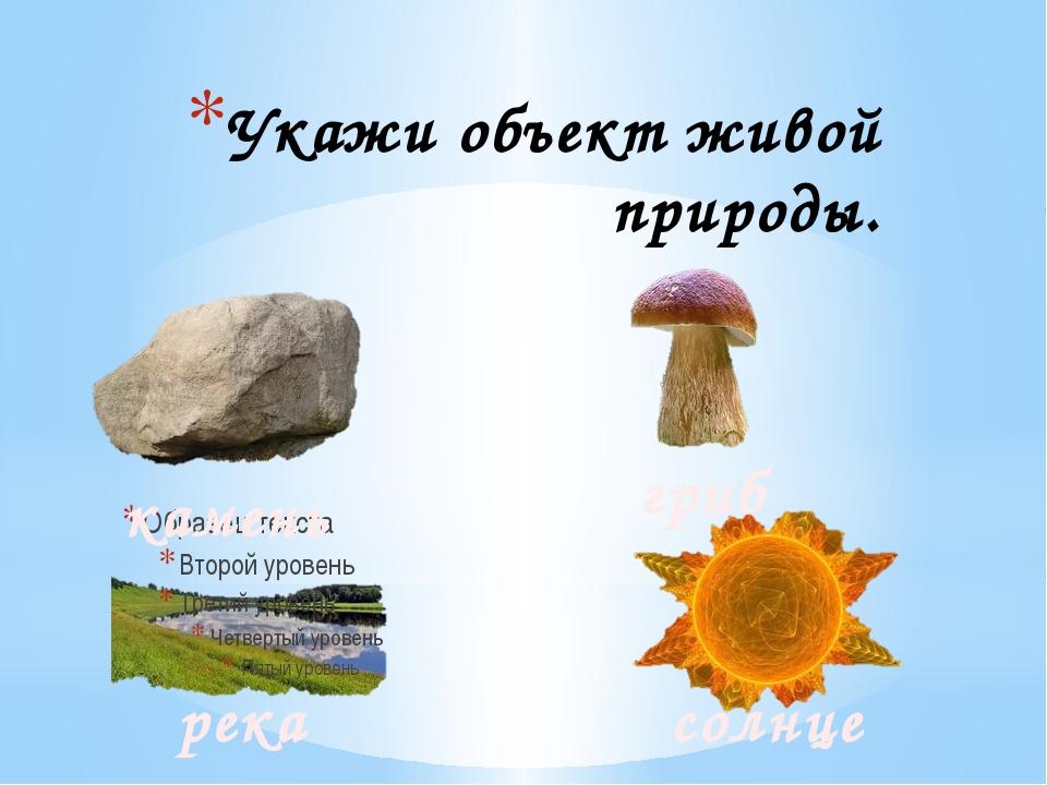 Укажи объект живой природы. камень гриб река солнце