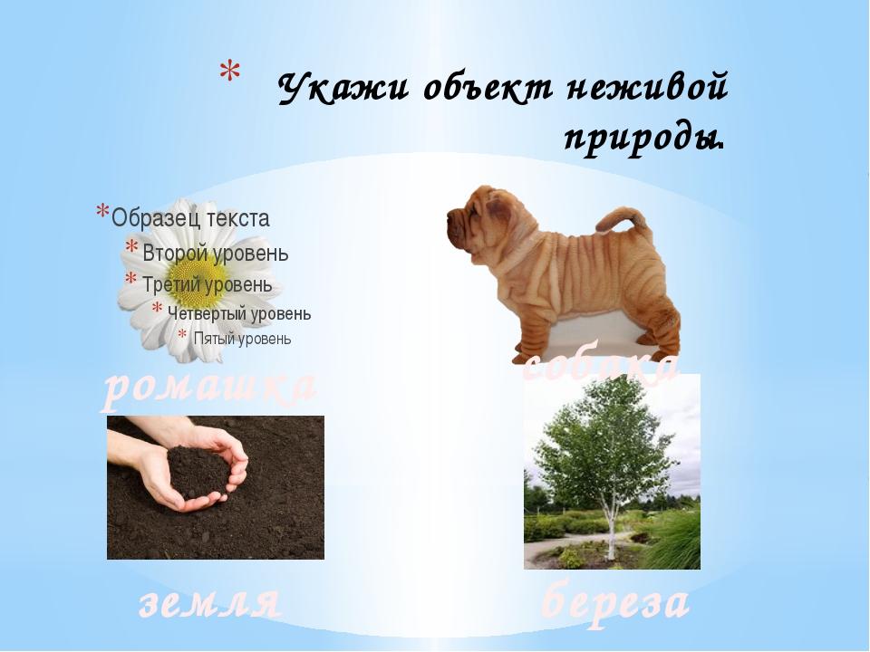 Укажи объект неживой природы. ромашка собака земля береза