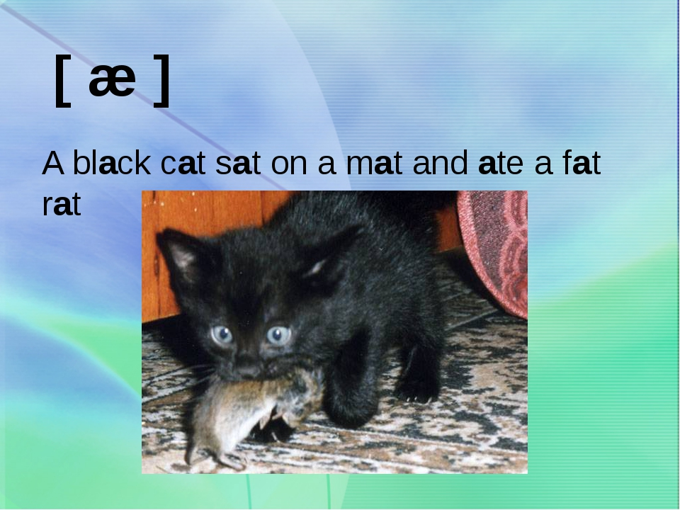 [ æ ] A black cat sat on a mat and ate a fat rat