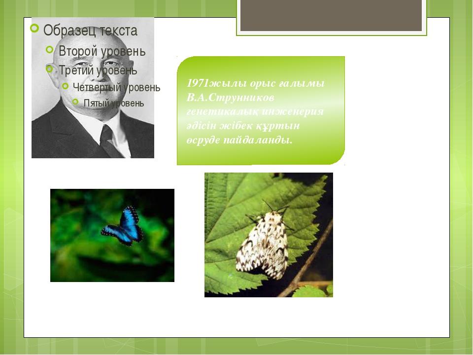 1971жылы орыс ғалымы В.А.Струнников генетикалық инженерия әдісін жібек құртын...