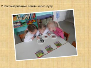 2.Рассматривание семян через лупу.