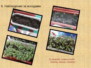 6. Наблюдение за всходами. В огороде снова в моде Зелень, овощи сажать!
