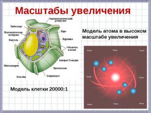 Модель клетки 20000:1 Масштабы увеличения Модель атома в высоком масштабе уве