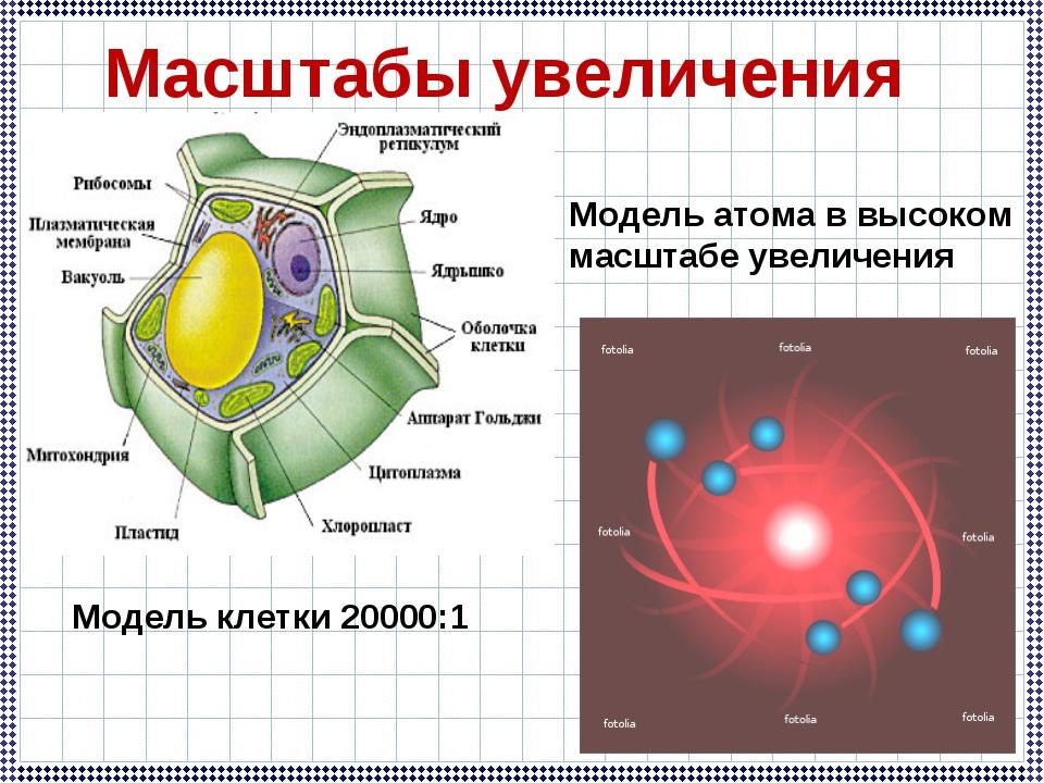 Модель клетки 20000:1 Масштабы увеличения Модель атома в высоком масштабе уве...