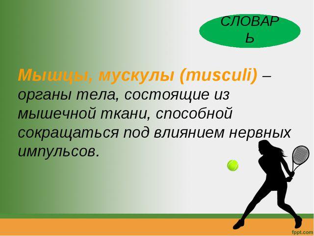 Мышцы, мускулы (musculi) – органы тела, состоящие из мышечной ткани, способно...