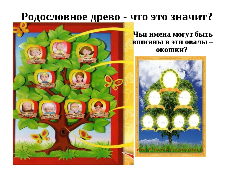 Родословное древо - что это значит? Чьи имена могут быть вписаны в эти овалы...