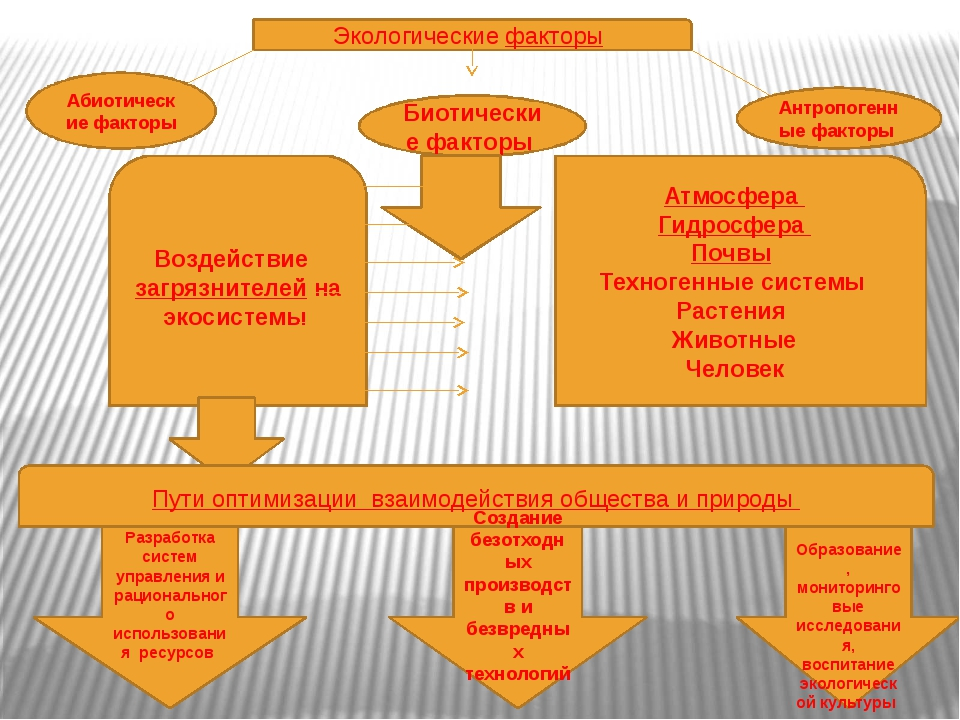 Экологические факторы Абиотические факторы Биотические факторы Антропогенные...