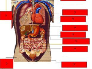 Топография биогенных элементов в организме человека ? ? ? ? ? ? ? ? ? ? тест