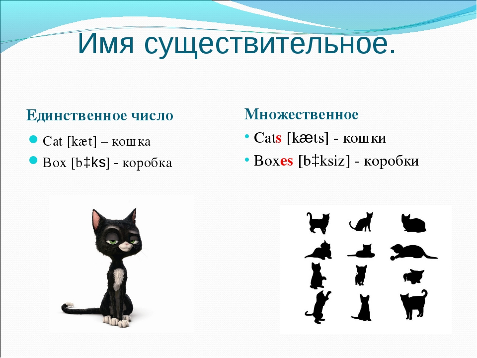 Имя существительное. Единственное число Множественное Cats [kæts] - кошки Box...